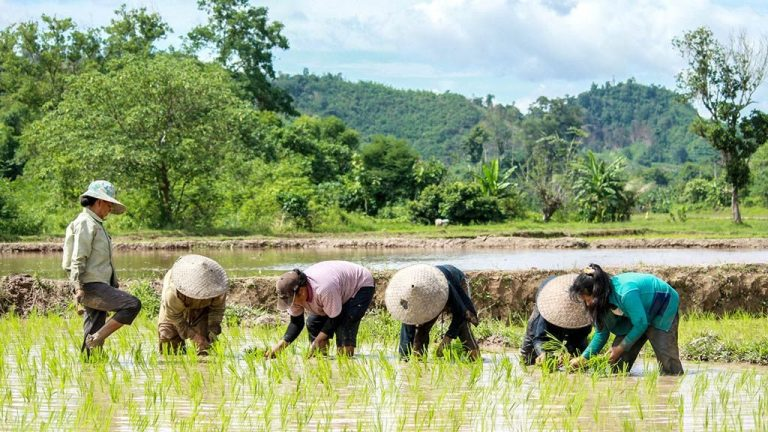 8966-lao-pdr-community-irrigation-women-farmers-results