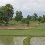 Attapeu Expands Rice Production