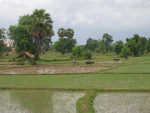 Laos_ricefields