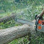 Illegal Chainsaws Remain Hidden In Saravan