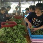 Migrants From Laos Experience Smoother Assimilation Into Thai Society