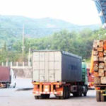 Only Certain Plantation Tree Species May Be Exported: Govt Spokesman