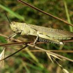 Govt Takes Aim at Locust Invasion