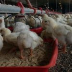 Ministry Demands Closure of Factory, Chicken Farm