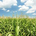 Khammuan Eyeing Increased Agricultural Exports