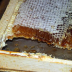 Beekeeping Trial to Sweeten Champassak Honey Production