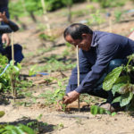 Laos Going Green, Aims to Plant 20 Million Saplings